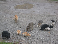 Help for Stray and Feral Cats Frederick MD