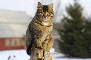 Care for outdoor cats in winter Frederick MD